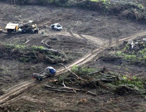 Salta: UN año de prisión para un productor por desmontar 10 mil hectáreas