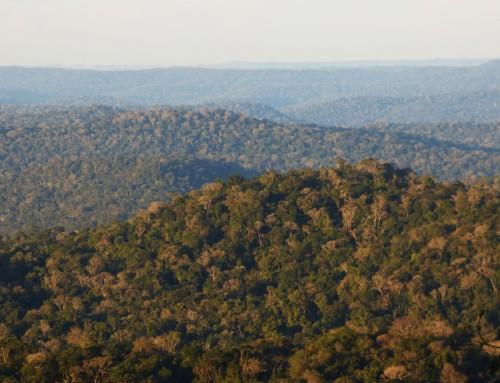 Iniciamos monitoreo de Yaguaretés en la Reserva de Biósfera Yabotí